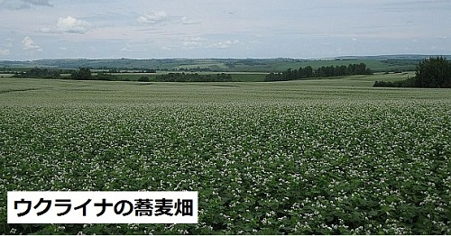 Ukrainian soba fields